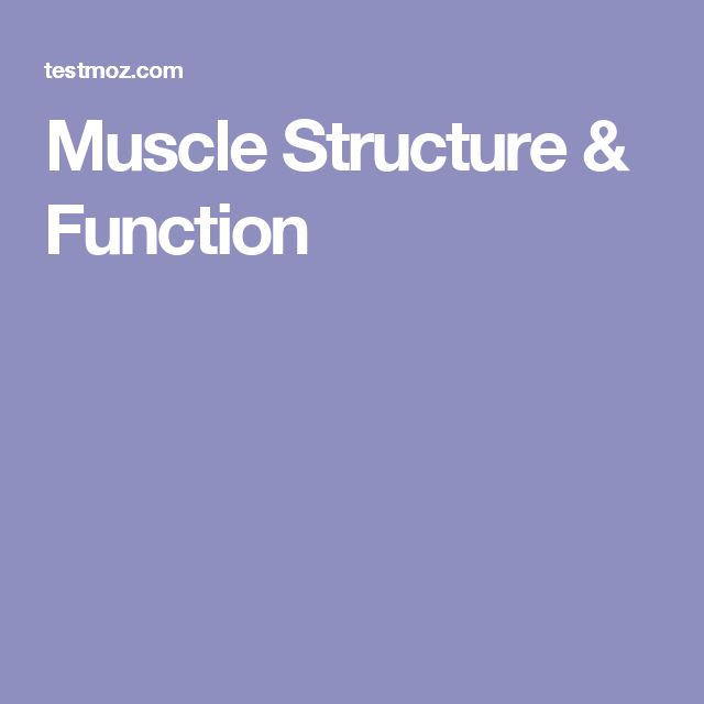 Muscle Structure & Function