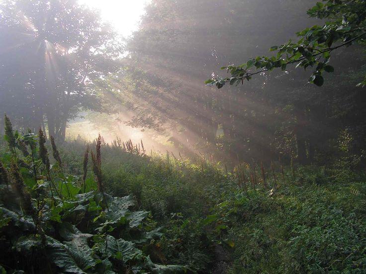 Národný park Poloniny a Medzinárodná biosférická rezervácia Východné Karpaty
