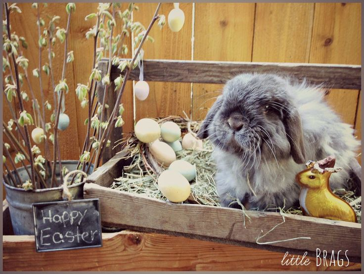 Little Brags: Serious Cuteness Alert -- The Real Easter Bunny - He looks so soft and cuddly!!!