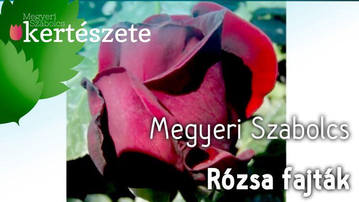 Rózsa vásárlása - Rózsa fajták képekkel - Rózsa tudnivalók