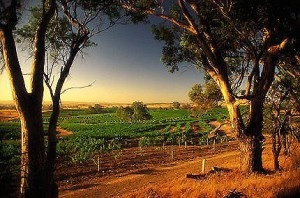 Western Australia - Winery tour, to Margaret River, the Great Southern Wine region and Swan Valley | Arblaster & Clarke Wine Tours Worldwide