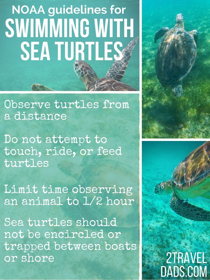 Swimming with sea turtles in Akumal Bay, between Playa del Carmen and Cancun, is an amazing encounter with nature, including coral reefs and stingrays. 2traveldads.com: