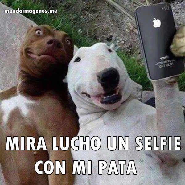 Pin De Tali Dines En Humor Imagenes De Animales Graciosas Selfie Perro Cuadros Del Perro