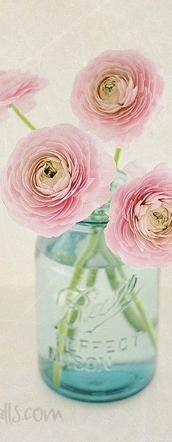 Gorgeous pink ranunculus. Photo by Lisa!!! on Flickr | Lisa Hall at pixhalls.com via We Heart It. @Four Seasons Bridal