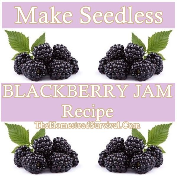 Make Seedless BLACKBERRY JAM Recipe Homesteading  - The Homestead Survival .Com