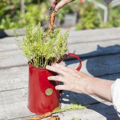 Klassiek model waterkan met royale inhoud en grote vulopening. Ideaal voor water geven in bloembakken, -potten of om een veldboeket in te doen. Tevens te gebruiken als (drink)waterkan.