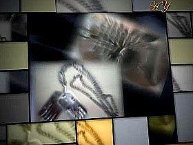 Hz. Mehdi (a.s.)'ın boynuna bakır bir levha asılacaktır - Harunyahya.org