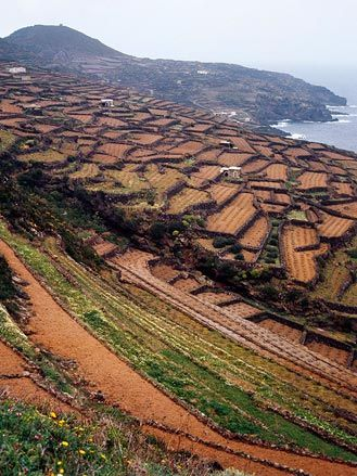 Tenute Donnafugata, Isola di Pantelleria, Sicily  https://www.facebook.com/restomisto?ref=hl
