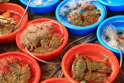 Crabs at a wet market in Hong Kong.  The market conditions have improved a lot in the last years. Now fish and crabs are provided with fresh running water, while waiting for a hungry customer.