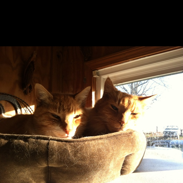 Pin By Kathie Smith On Pets Cats Pets Animals