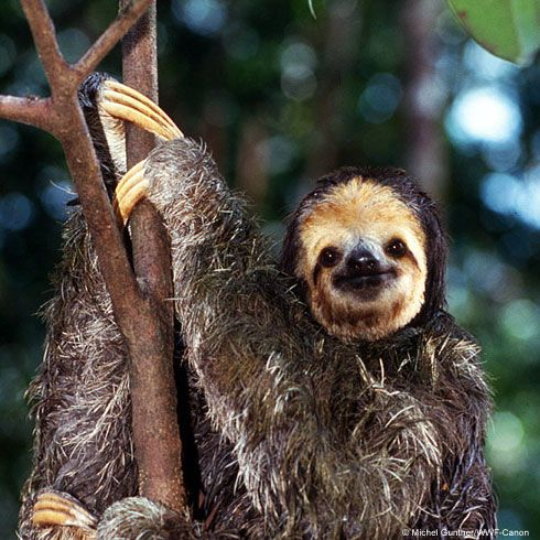 Adopt a beautiful creature from World Wildlife Federation