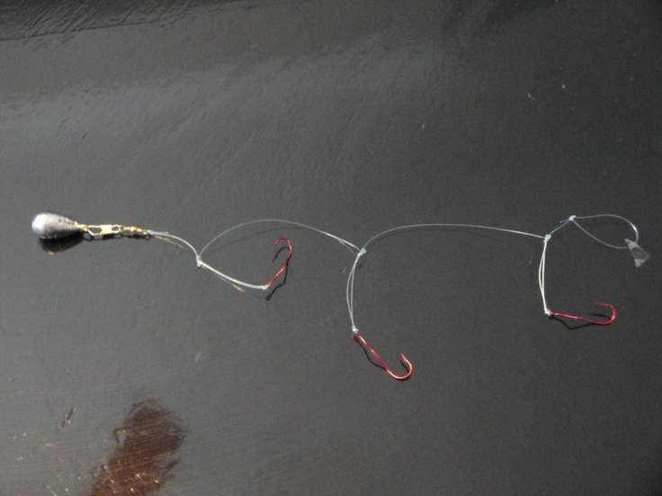 1000 ideas about fishing report on pinterest fishing for Lake erie fishing