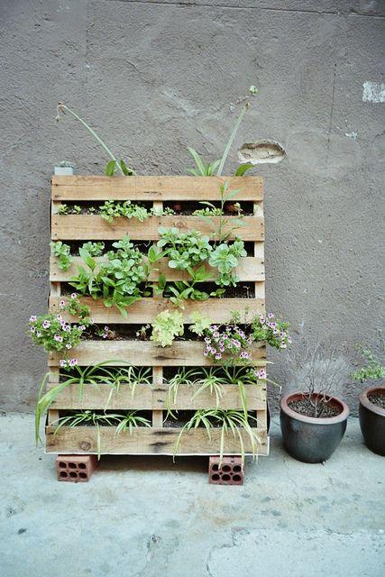 urban gardening   #Expo2015#Milan #WorldsFair
