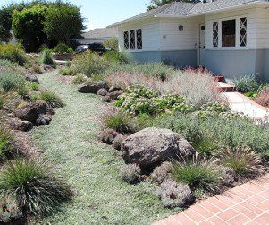 15 best ideas about California Native Plant Garden on Pinterest