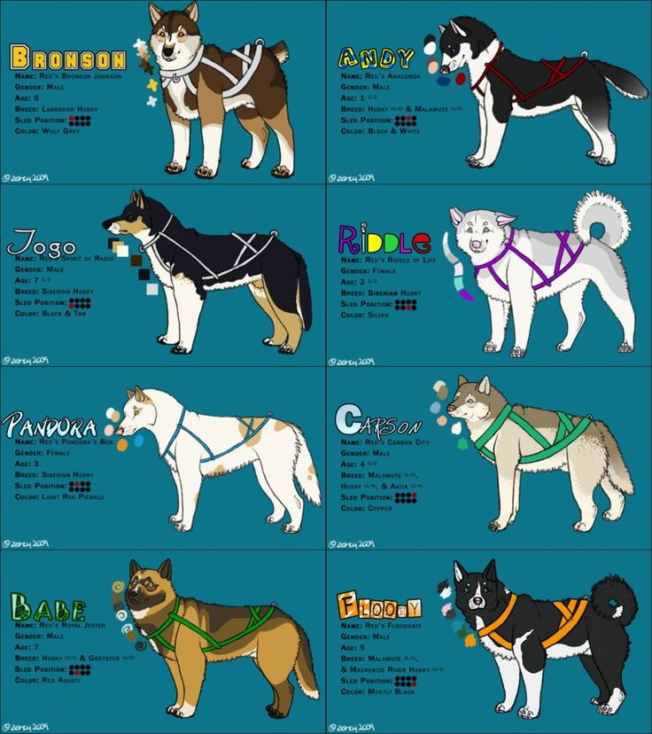 how to draw a dog sled team