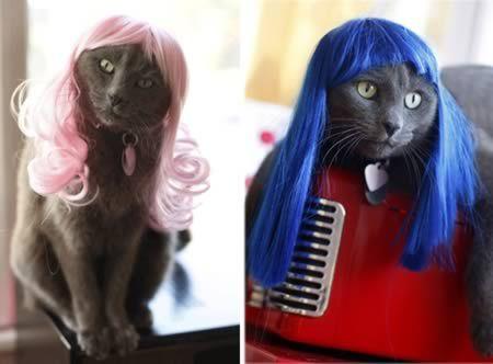 10 Wackiest Wigs (peruke, funny wigs) - ODDEE