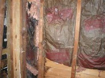Perfect Them Additionally Destroys Our Overall Health. Most Individuals Either  Overlook The Mold Removal Ft Worth Growing In Their Basement Or Lavatory, Pictures Gallery