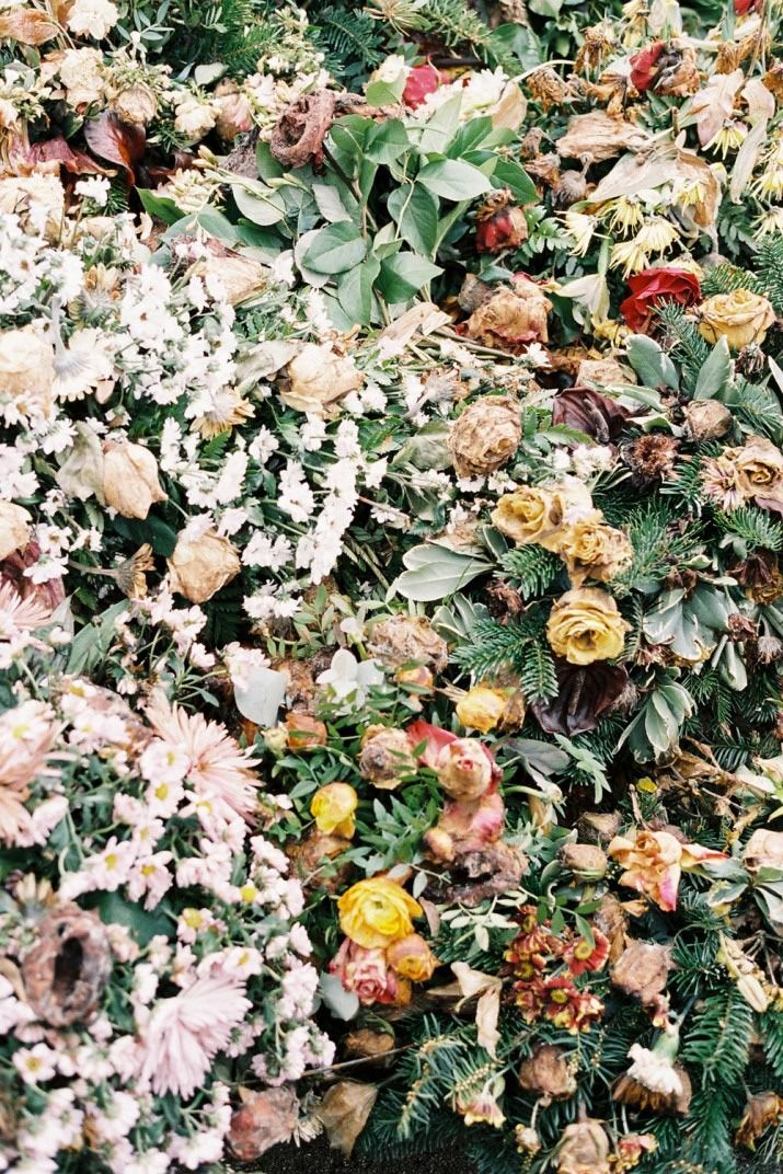 cold rockin: Inspiration, Pattern, Art, Beautiful, Bloom, Things, Flowers, Photography, Floral