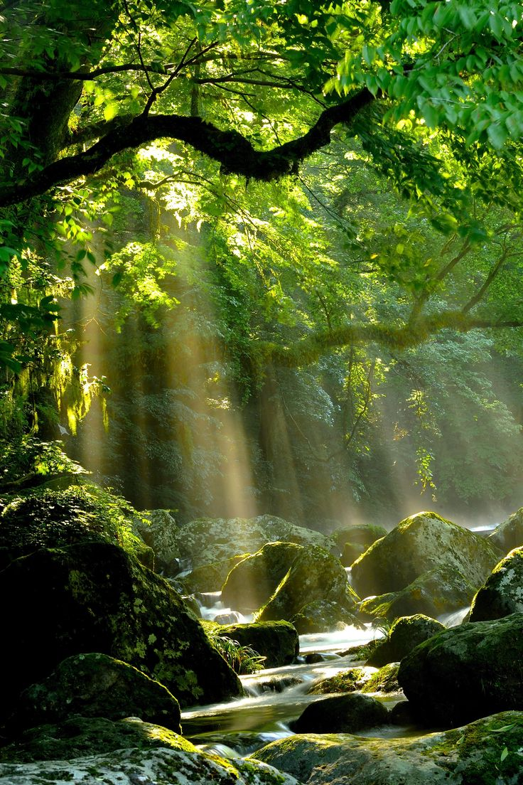 Beautiful mystical forest