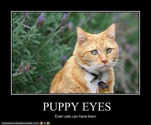 Kitty Cat Eyes