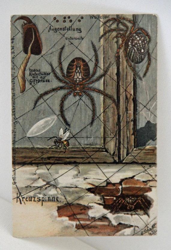 Germany Biologische Postkarten Serie II Spider Spinne Araignée Postcard Paper Card Flora And Fauna