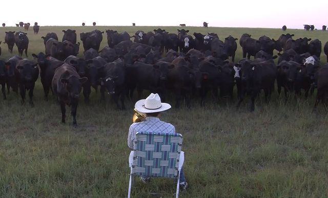 Farmer Serenades His Cows With A Trombone Cover Of Lorde's 'Royals' (via Bloglovin.com )