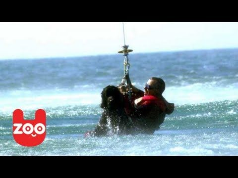 These wonderful dogs are amazing: Newfoundland Rescue Dogs Jump From Helicopter - YouTube