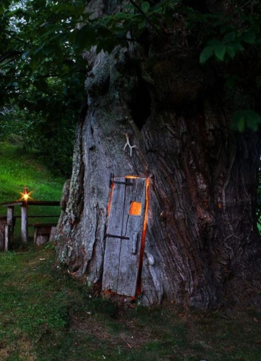 As Cosy As Can Be / Not your traditional treehouse.  This one is INSIDE the tree! Cool!