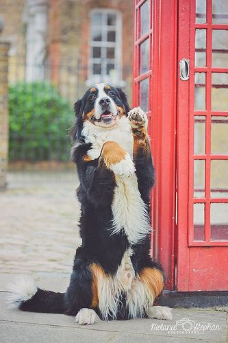 2014 9/52 ~ London Calling   by Melanie M Stephan
