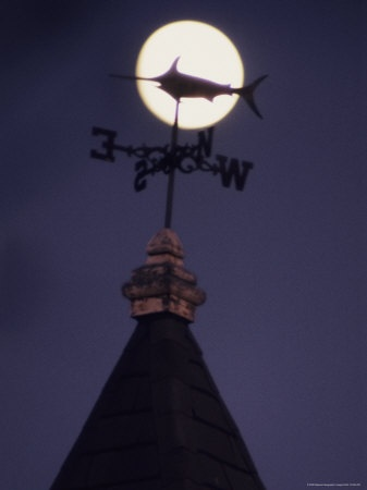 Silhouetted Weather Vane in Moonlight