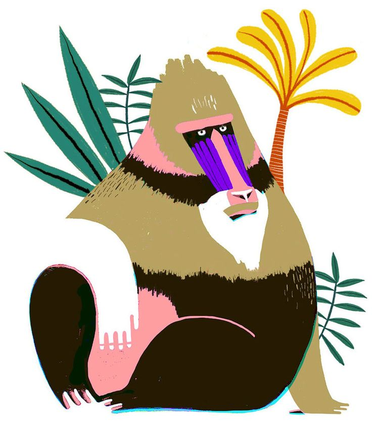#MijkeCoebergh, #illustration, #Mandrill, #Monkey, #botanical, #pencildrawing, #digitaldrawing, #character, #characterdesign, #colourfull, #jungle