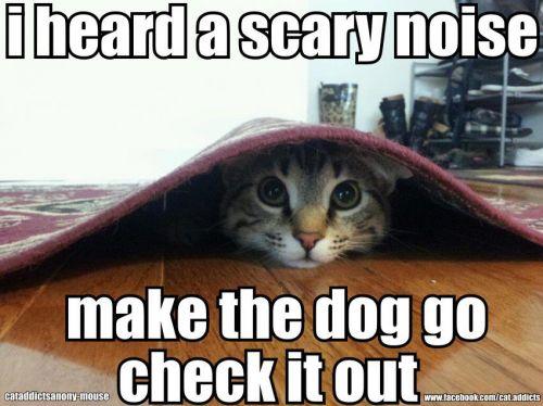 Kitty Is Scared Meme | Slapcaption.com