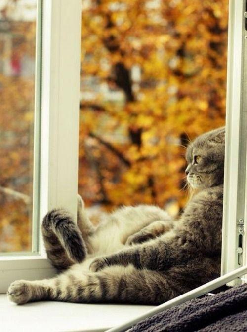 moi l'automne ça me rend mélancolique!