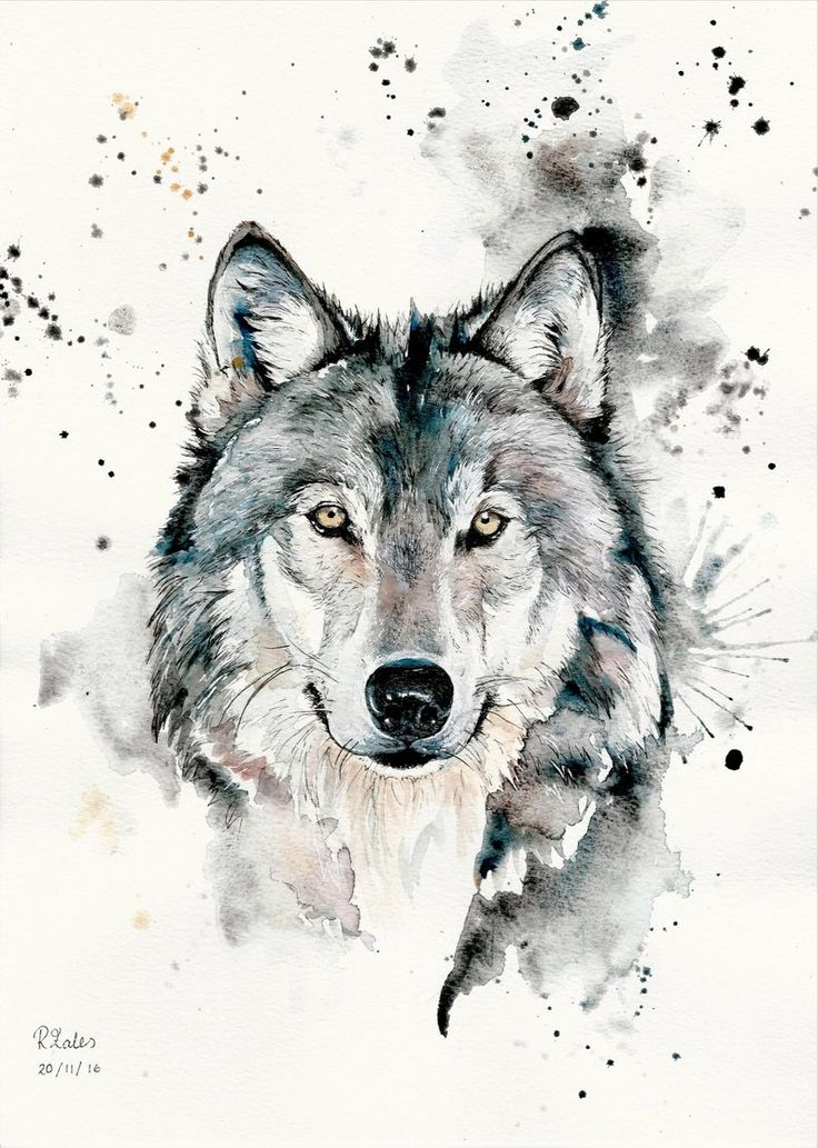 A5, A4, A3 Watercolour Painting and Pen Wolf Original Art Print – Limited Edition