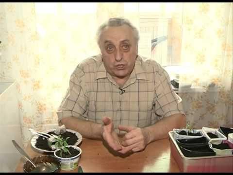 Мошки на рассаде: как с ними бороться? Урожайные грядки. - YouTube