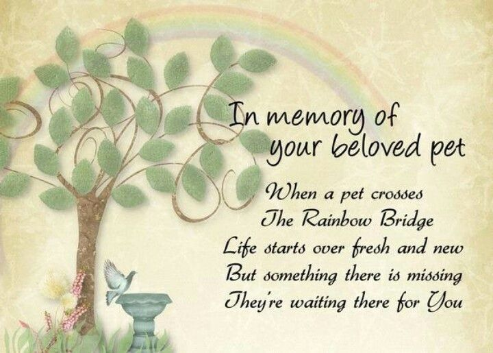 photograph about Printable Rainbow Bridge Poem named Free of charge Printable Rainbow Bridge Poem 37 Luxurious Gallery Cost-free