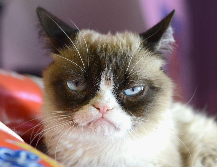 Le top 20 des phrases les plus agaçantes sur les chats....