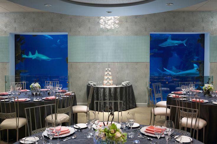 Wedding Venues At Mandalay Bay Las Vegas Sharks