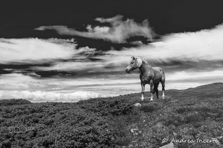 High mountain horse - null