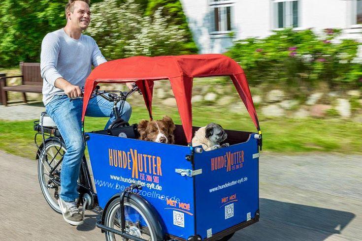 Hundekutter: Urlaub mit Hund auf Sylt – Auf Sylt wird jetzt gekuttert