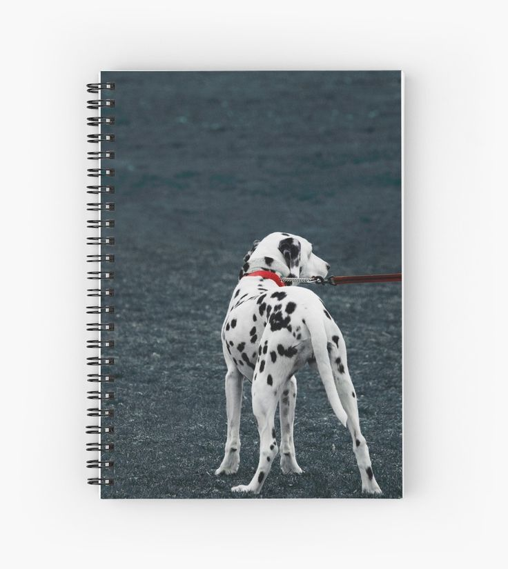 Photograph of a black spotted dalmatian dog on a bright red leash in the field spiral notebook. • Also buy this artwork on stationery, apparel, stickers, and more.