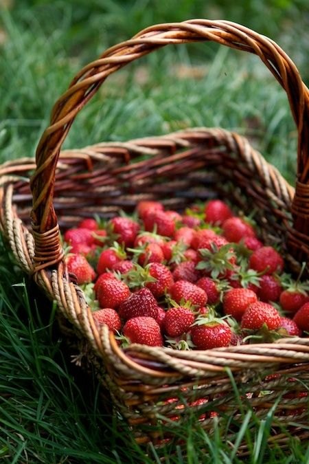 nothing better than picking strawberries in a basket...