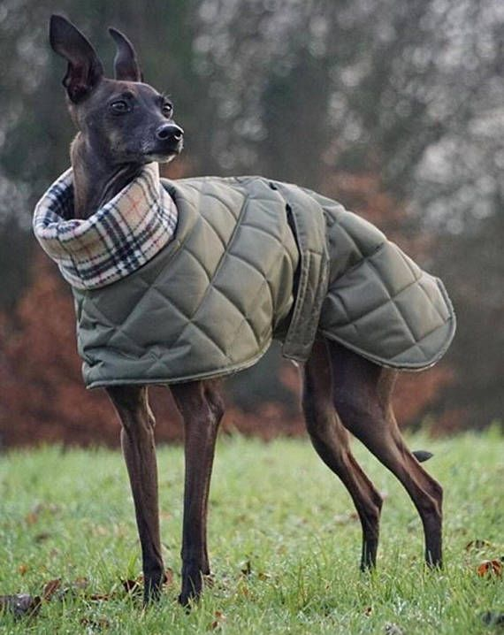 Waterproof winter coat for whippets sighthounds and other dogs