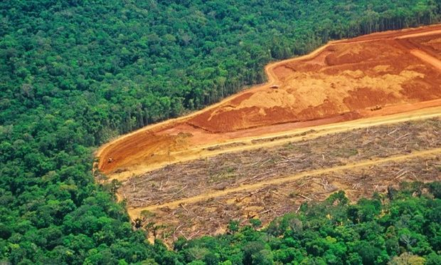 Rate of global forest loss halved, says UN http://gu.com/p/4c6ff/stw #Climate #Environment #Carbon #FossilFuels #Sustainable #SustainableLiving #GoGreen #RenewableEnergy #EcoFriendly #CarbonFootprint #Plastic #Reduce #Reuse #Recycle #WasteManagement #Sustainability