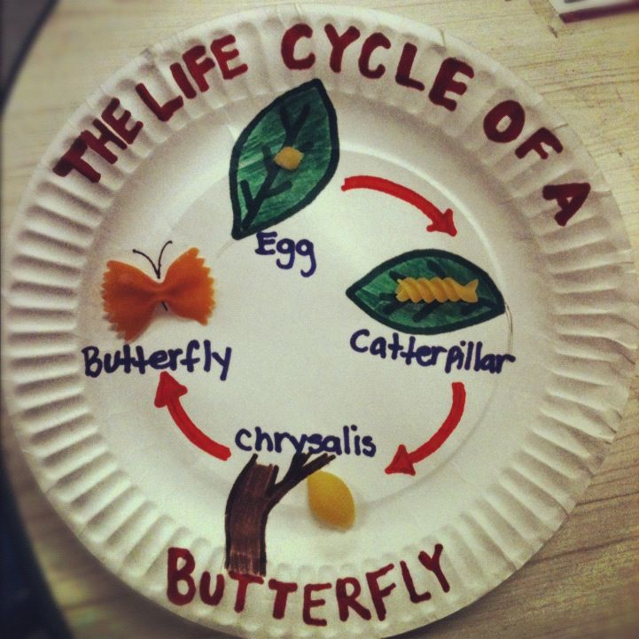 The life cycle of a butterfly with pasta. Drawn with marker and glued the pasta on the paper plate. Very easy and simple.