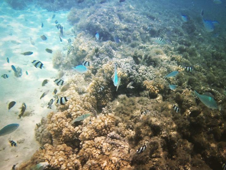 Just keep swimming... Fiji
