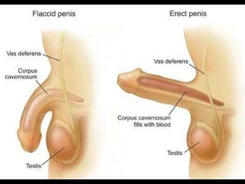 Traitement des problèmes liés aux sexe(éjaculation précoce, faiblesse... - YouTube
