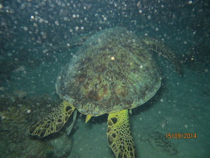 Turtle on night dive