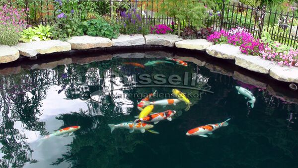 55 best pond supplies images on pinterest koi pond and