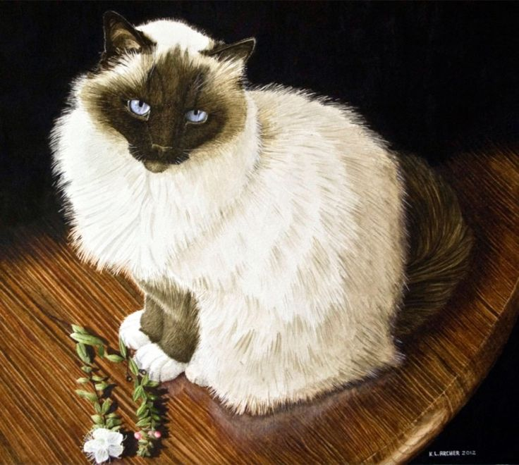 Wildlife and pet portraits in watercolour at Kelly Archer Pet Portraits  #birmancat #birman #watercolour #watercolour #petportrait #petportraits #cat